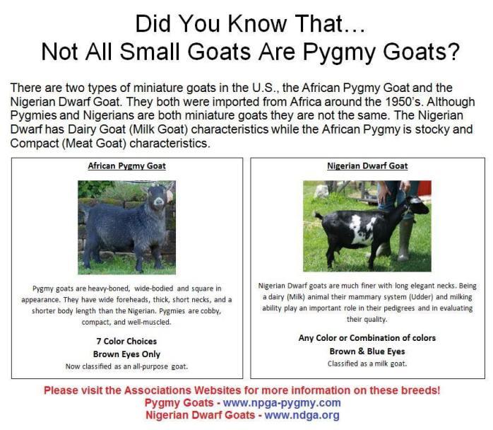 goat comparison