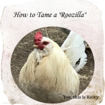 https://sagebrushhomesteading.blog/2019/05/02/so-you-have-a-roozilla/